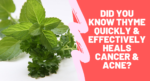 Did You know Thyme Quickly & Effectively Heals Breast Cancer & Acne?